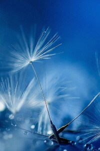480x854 Blue Drops Full HD