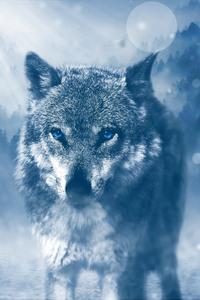 320x568 Blue Eyed Wolf