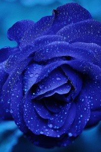 320x480 Blue Flower 4k 5k