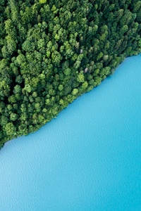 Blue Lake Water Green Trees Plants Forests
