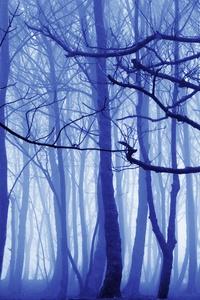 Blue Mist Nature Trees 4k