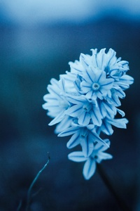 1440x2560 Blue Petal Flowers
