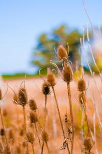 Bokeh Field Crops 5k