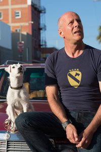 1125x2436 Bruce Willis With Dog In Once Upon A Time In Venice
