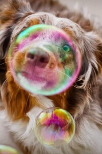 1242x2688 Bubble Dog Photography