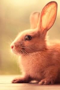 1125x2436 Bunny Cute