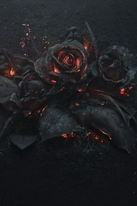 320x480 Burning Roses 5k
