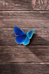 Butterfly 8k