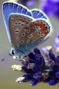 360x640 Butterfly Flower Wings