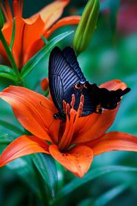 1242x2688 Butterfly Macro 4k