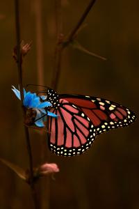 1080x2280 Butterfly Macro 5k