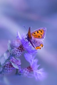 360x640 Butterfly Purple Flower