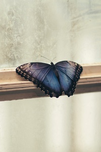 320x480 Butterfly Sitting On Window Side 5k