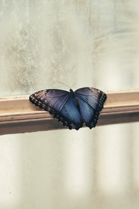 1080x2160 Butterfly Sitting Window 5k
