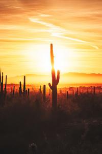 Cactus Field Sunset 4k