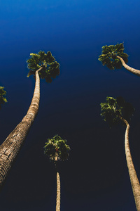 1080x2280 California Palm Trees