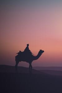 Camel Desert Minimalist