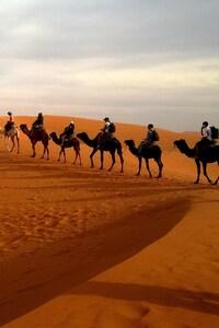 Camels In Caravan Desert