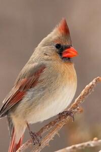 540x960 Carnial Birds