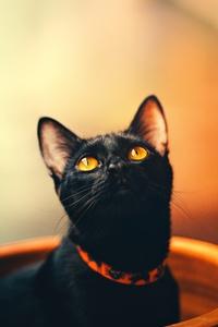 640x1136 Cat 5k
