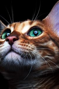 Cat Deep Sea Green Eyes
