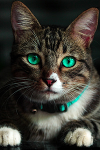 1080x2280 Cat Green Eyes 4k