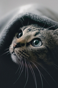 1440x2960 Cat Hideout 5k