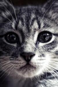 320x568 Cat