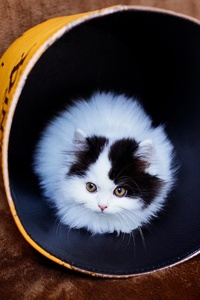 750x1334 Cat In Bucket