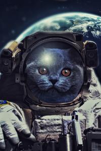 540x960 Cat In Space 4k