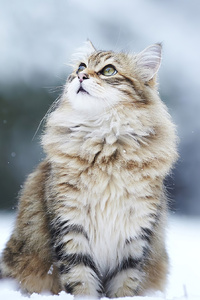 1080x2280 Cat In Winter