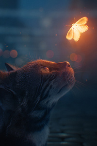 Cat Looking At Butterfly Digital Art