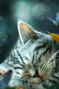 Cat Nap Daydream