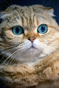 1125x2436 Cat Ocean Eyes
