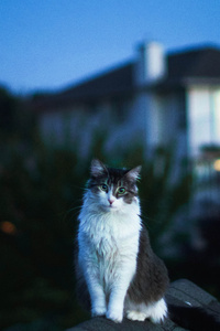 1125x2436 Cat On Roof 5k
