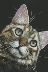 640x1136 Cat Painting 4k
