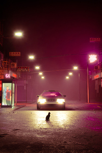 1080x2160 Cat Road Delorean 4k
