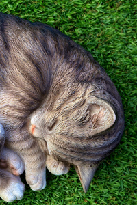Cat Sleeping Relax Cute 5k