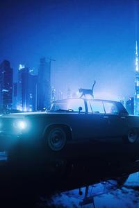 1440x2960 Cat Walking On Car Blue Night 5k