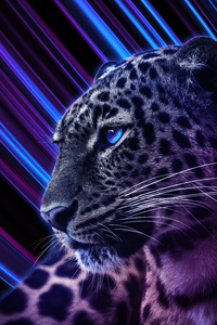 Cheetah Galaxy Eyes 4k
