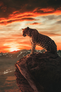 640x1136 Cheetah Morning Time 4k