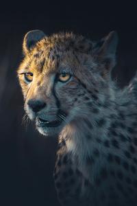 720x1280 Cheetah Portrait