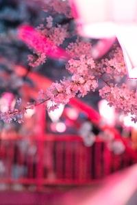 750x1334 Cherry Blossom Flora Flowers 5k