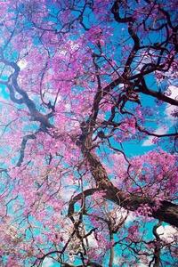240x400 Cherry Blossom Tree