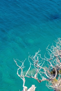 Clear Sea Trees Branches Ultra Quality 4k
