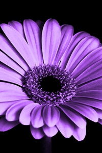 Close Up Of Purple Petaled Flower
