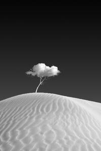 360x640 Cloud On Tree