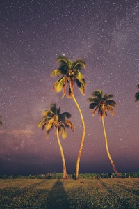 1080x2280 Coconut Trees Under Starry Sky