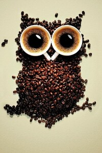 750x1334 Coffee Beans Owl Art