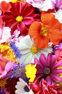 720x1280 Colorful HD Flowers